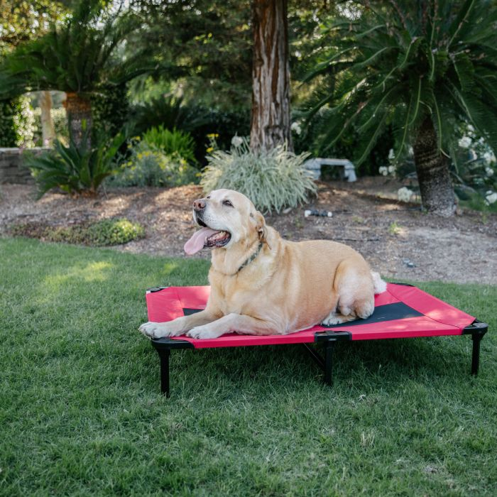 Lucky Dog® Elevated Pet Bed, Red