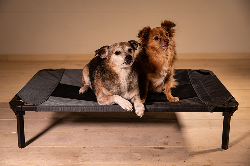 Lucky Dog® Elevated Pet Bed - Grey