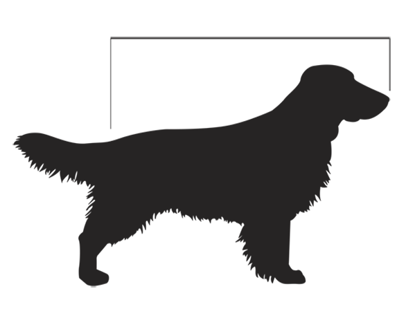 Measure Your Dog's Length
