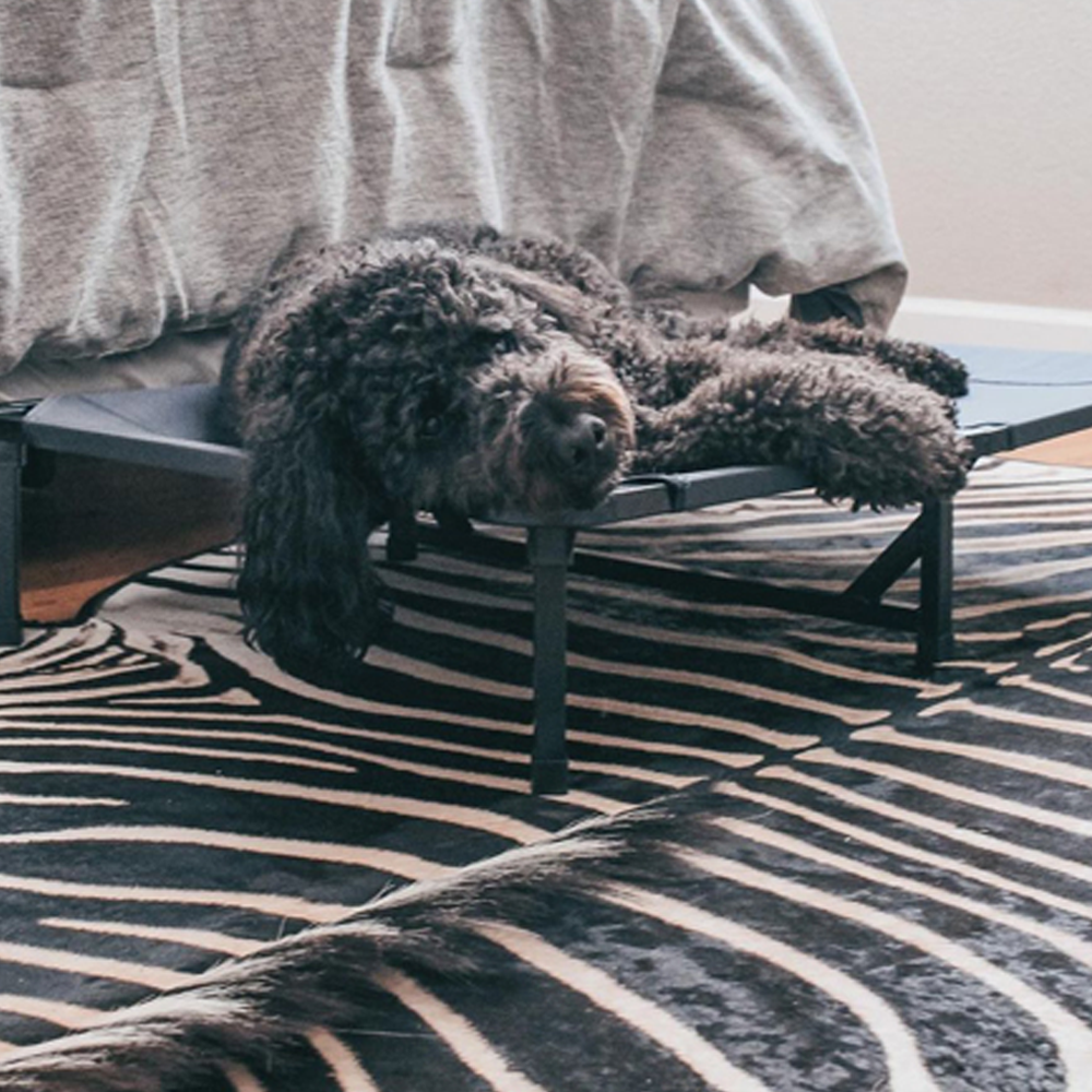 Lucky Dog Elevated Pet Bed, Featured Chipperdood