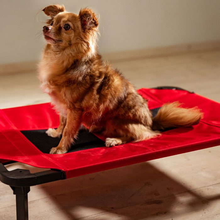 Elevate Your Pooch's Snooze Experience with Lucky Dog Elevated Pet Bed