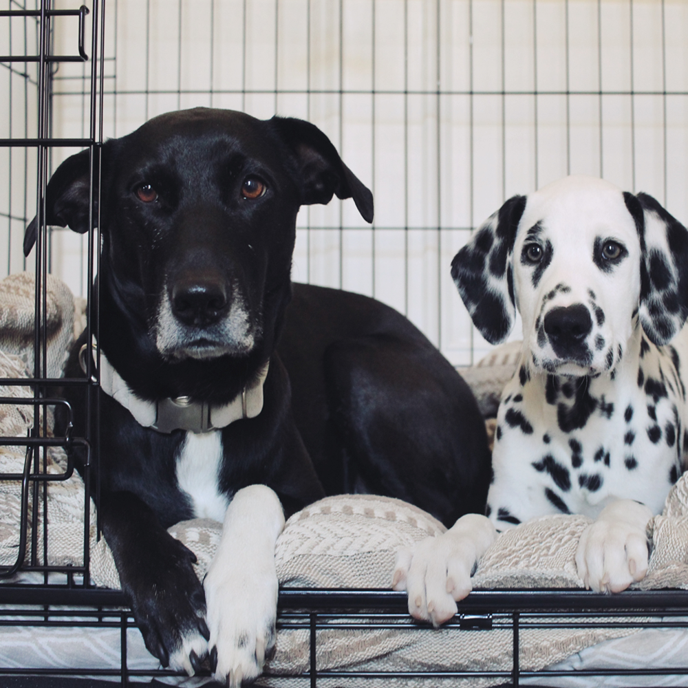 Lucky Dog Sliding Door Dog Crate, Featured Blacknwhitewoofs