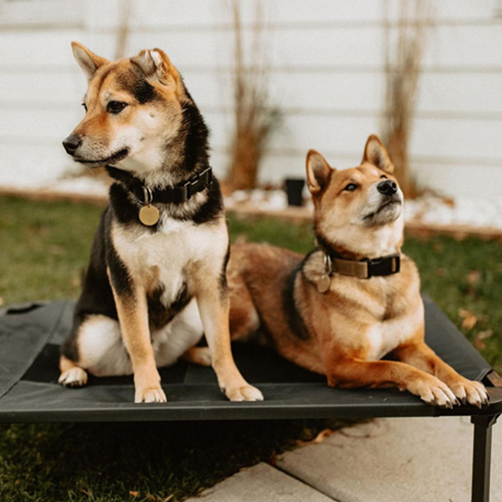 Lucky Dog Elevated Pet Bed, Featured Kaleigh Rae